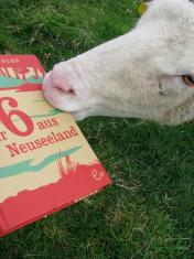 Neuseeländische Schafe mögen »Wir sechs aus Neuseeland« auch in der deutschen Fassung