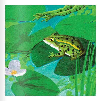 Seitenvorschau Der Frosch